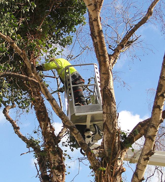 Grünbau-Inklusiv-Baumschnitt