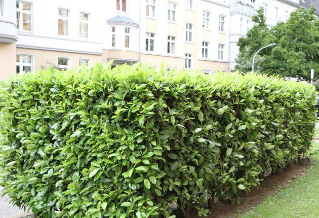 Grünbau Inklusiv Strauchschnitt