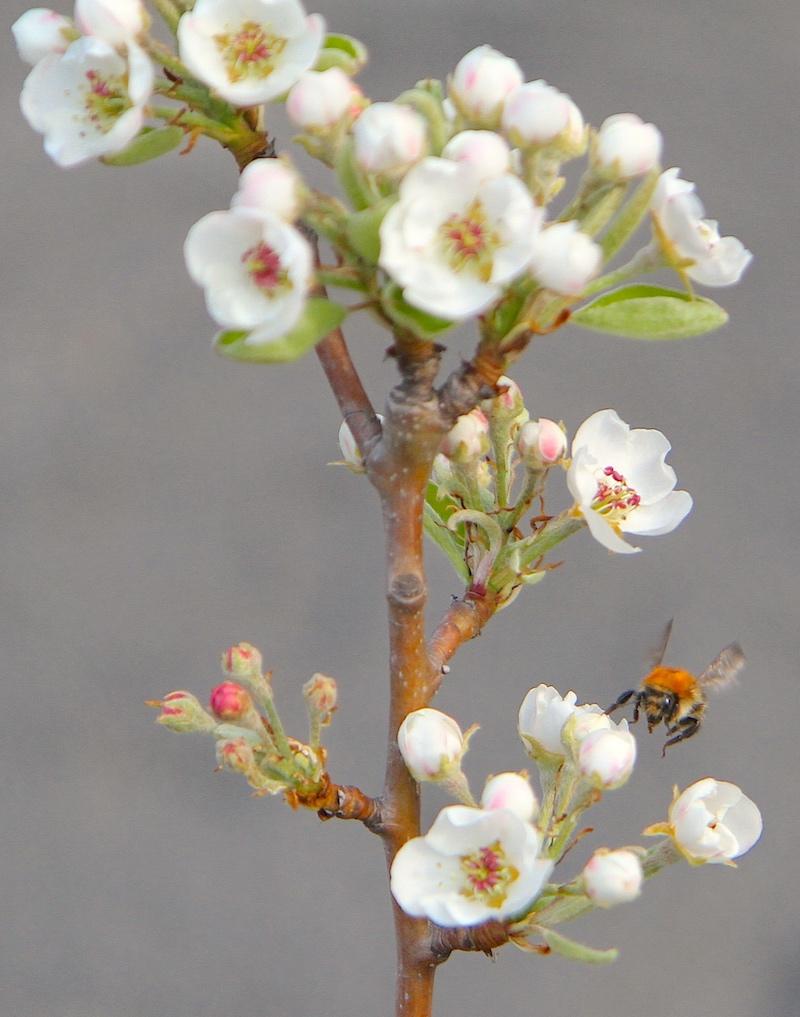 Grünbau Inklusiv Blüte